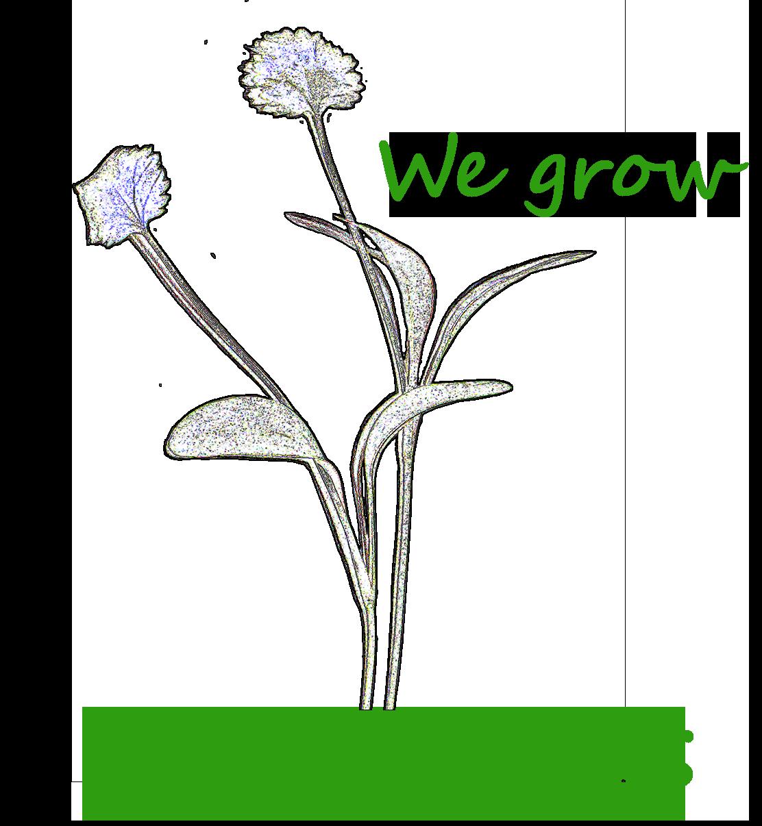 We Grow Microgreens, LLC